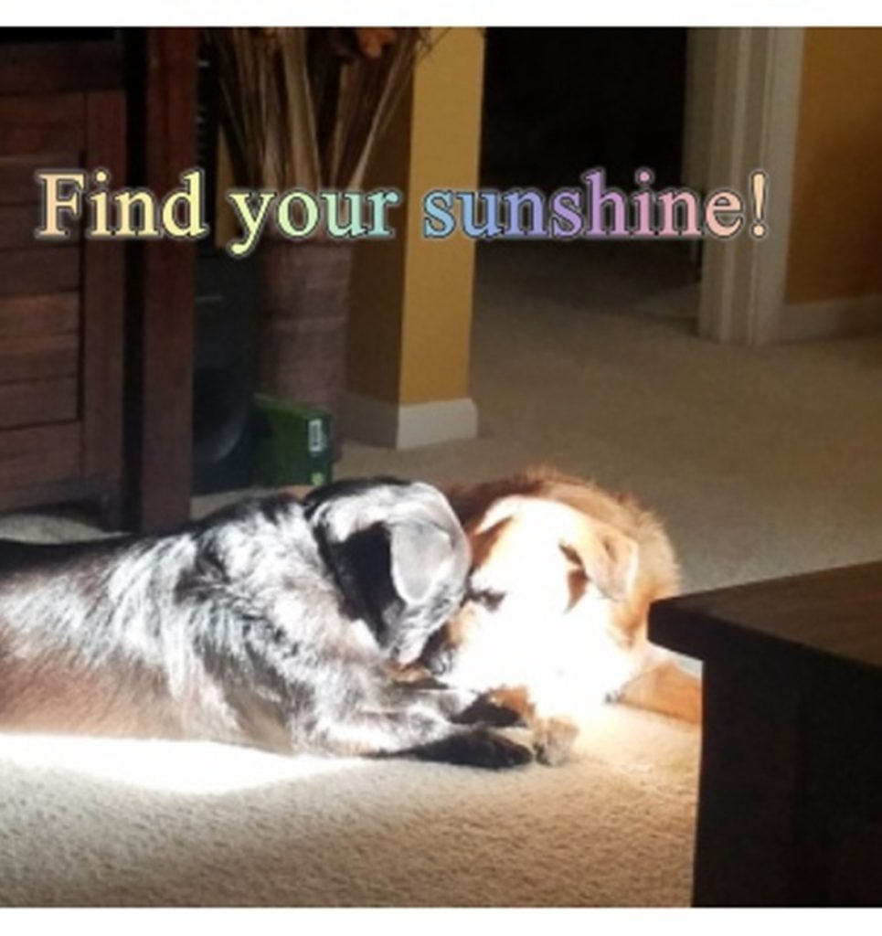 find_your_sunshine